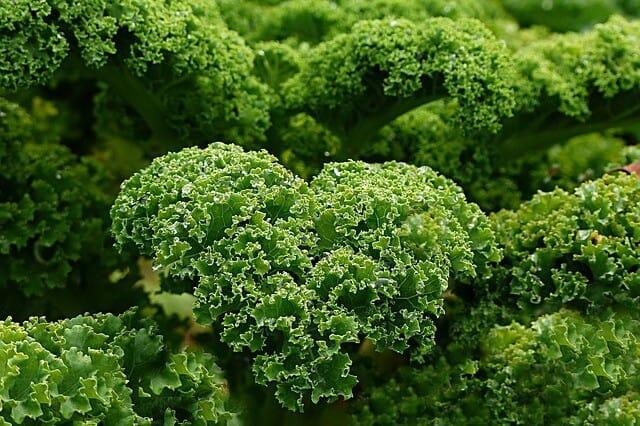 kale heart plant