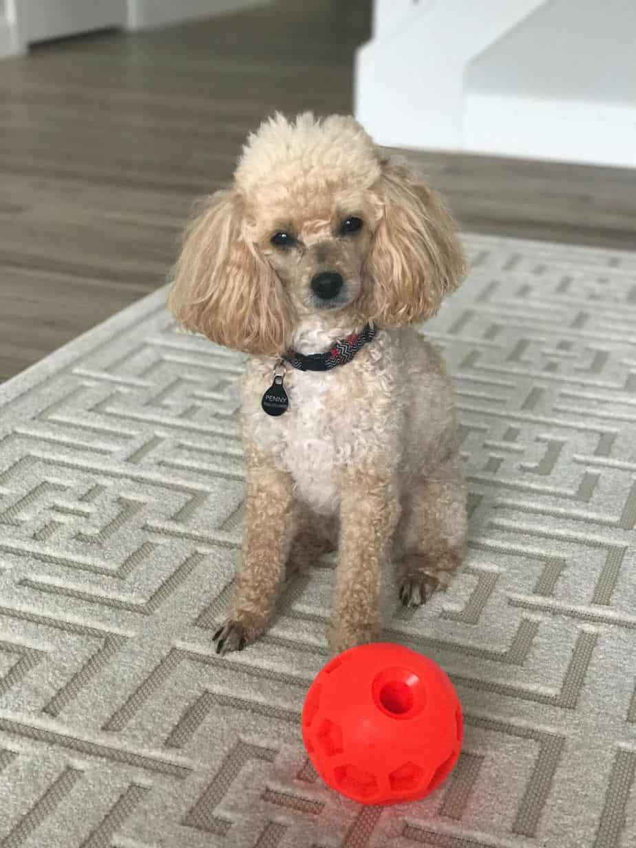 penny with her ball