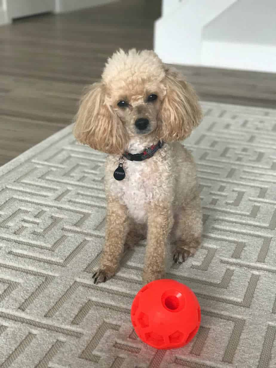 penny with her food ball 3