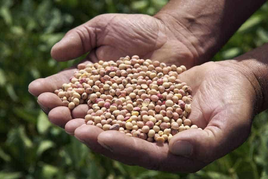 man holding soybeans