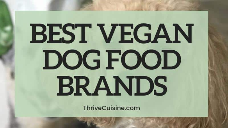 BEST VEGAN DOG FOOD BRANDS