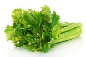 Fresh green celery isolated on white