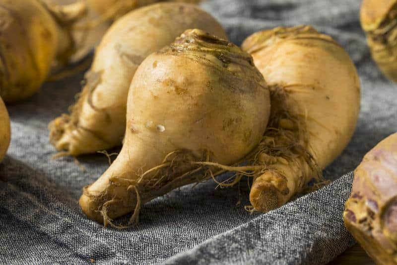 Healthy Raw Organic Brown Rutabaga Root Vegetables