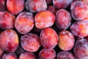 closeup of plums grouped together
