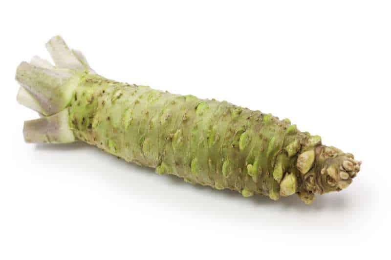 real wasabi root on white background