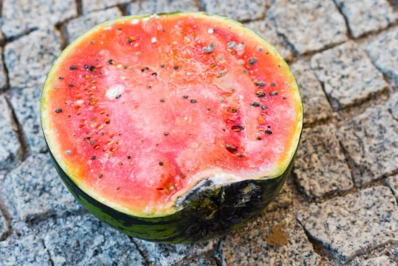 Bad Watermelon with a touch of mold
