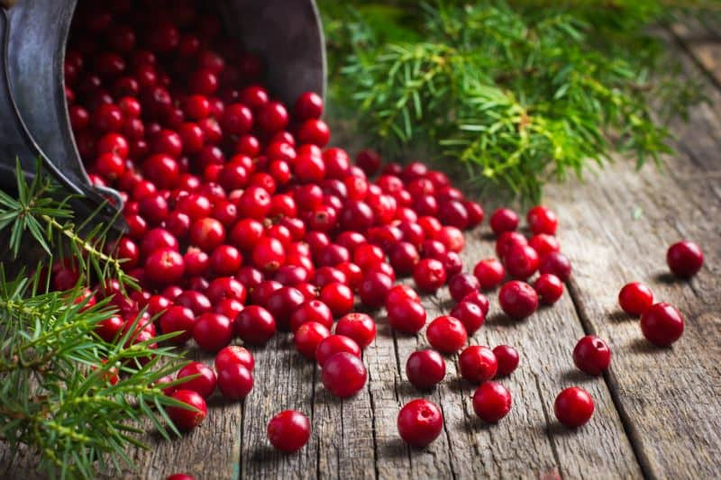 fresh cranberry (cowberry) on wooden background, selective focus