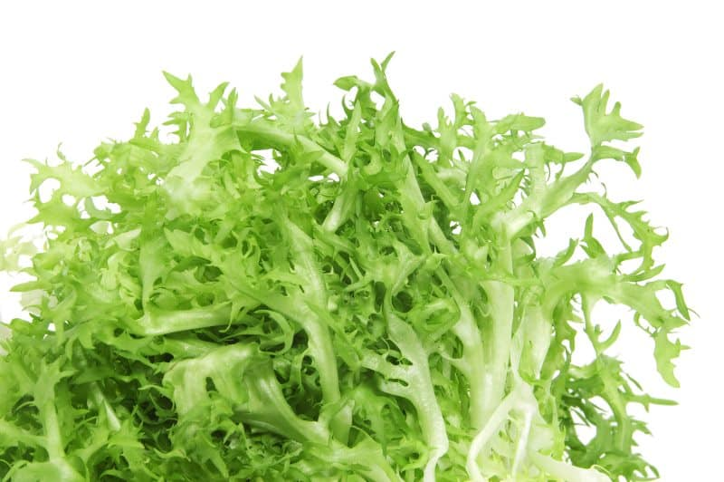Closeup of an escarole endive isolated on a white background