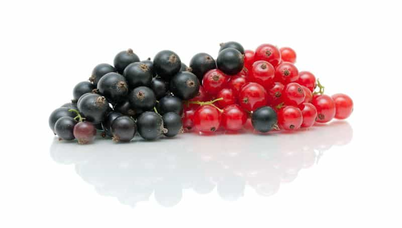 Fresh red and black currants on a white background.