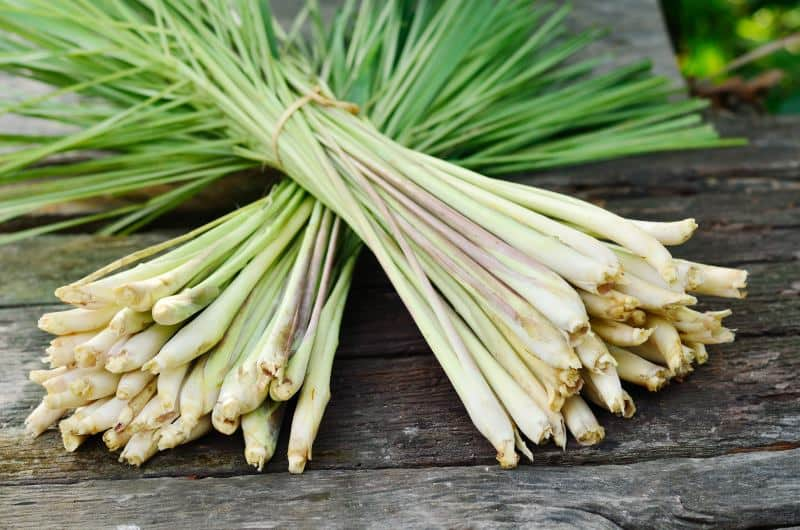 Bundles of lemongrass stalks on a wooden table.