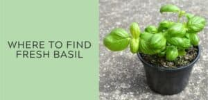 where to find fresh basil