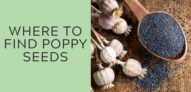 where to find poppy seeds