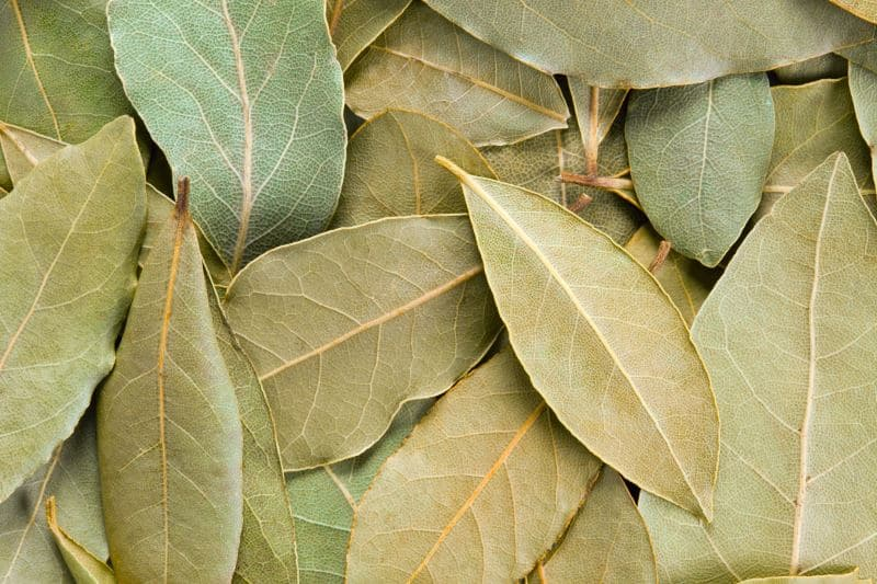 Dried bay leaves in a heap