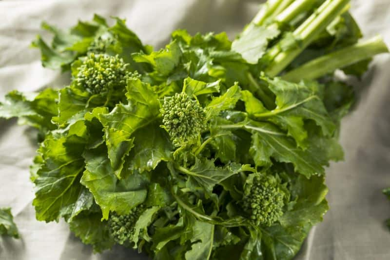 A close-up of a bunch of broccoli rabe on a white background.