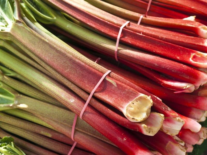 Fresh rhubarb stalks in bunches tied with elastic bands.