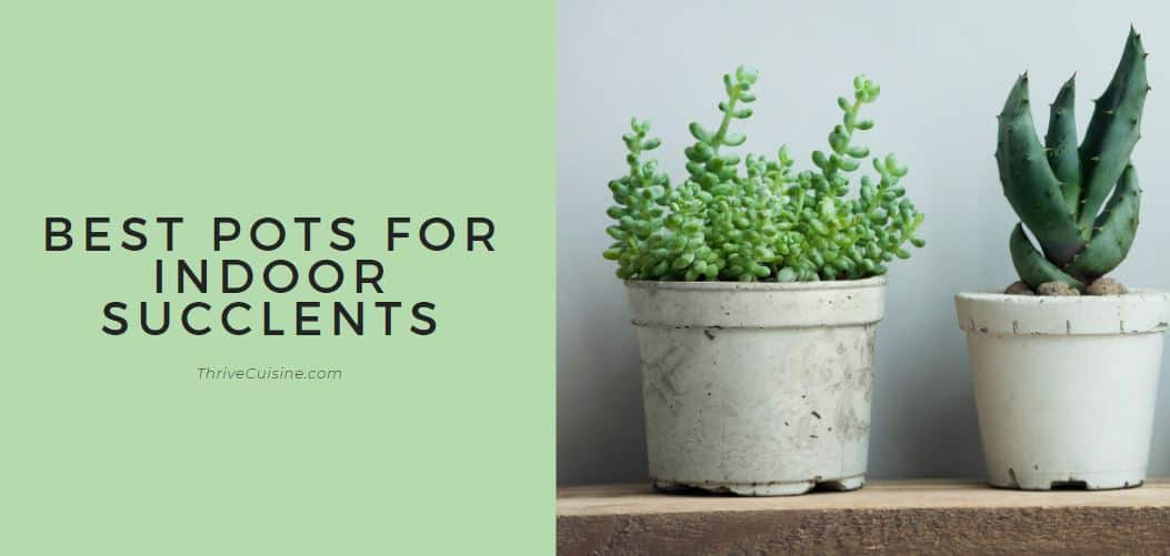 BEST POTS FOR INDOOR SUCCULENTS