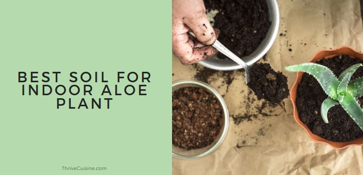 Best Soil for Indoor Aloe Plants