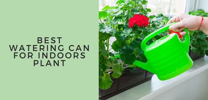 Best Watering Can For Indoors Plant