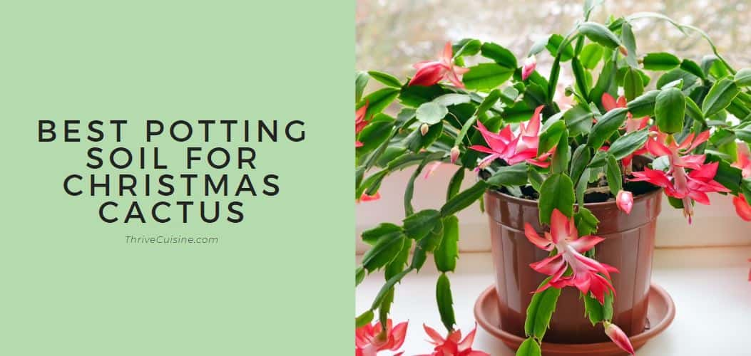 best potting soil for christmas cactus