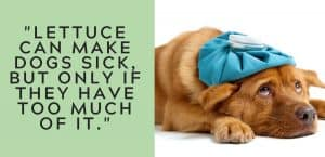 lettuce can make dogs sick
