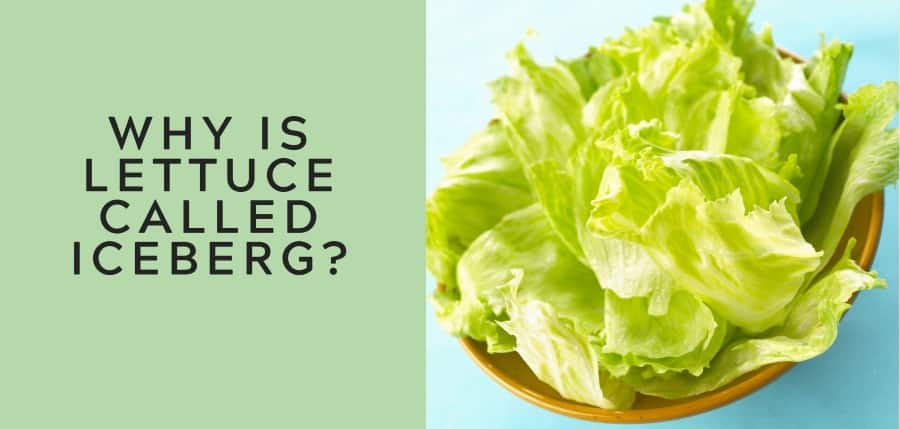 why is lettuce called iceberg