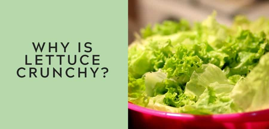 why is lettuce crunchy 1