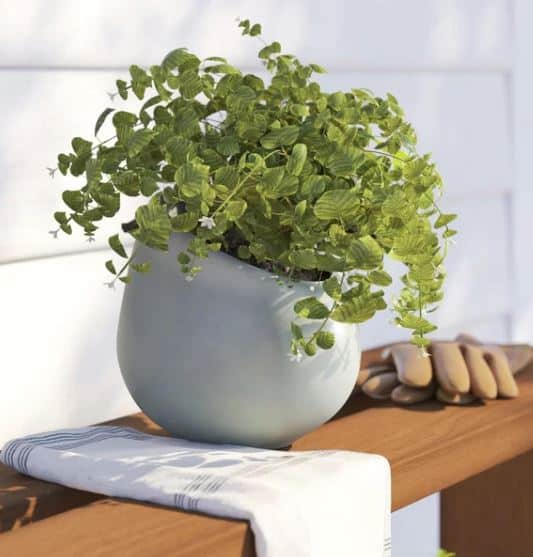 Achilles Porcelain Wall Planter