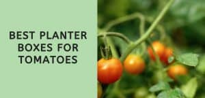 Best Planter Boxes for Tomatoes