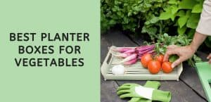 Best Planter Boxes for Vegetables