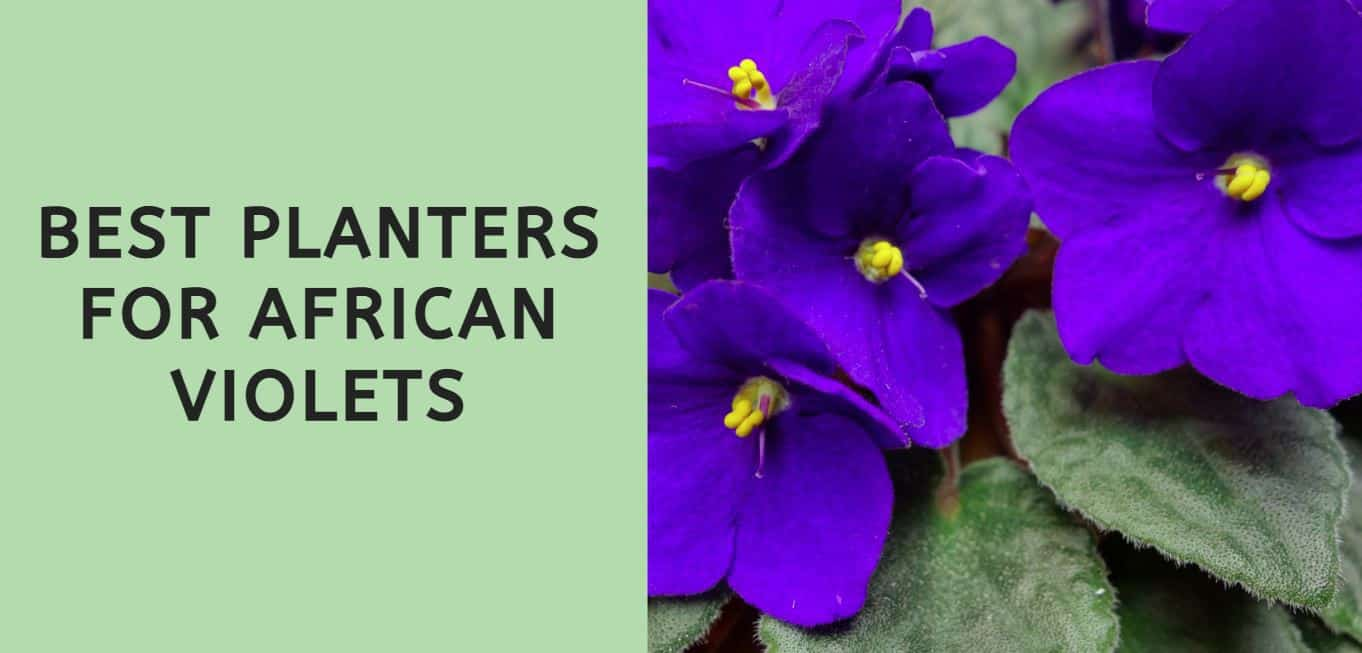 Best Planters for African Violets