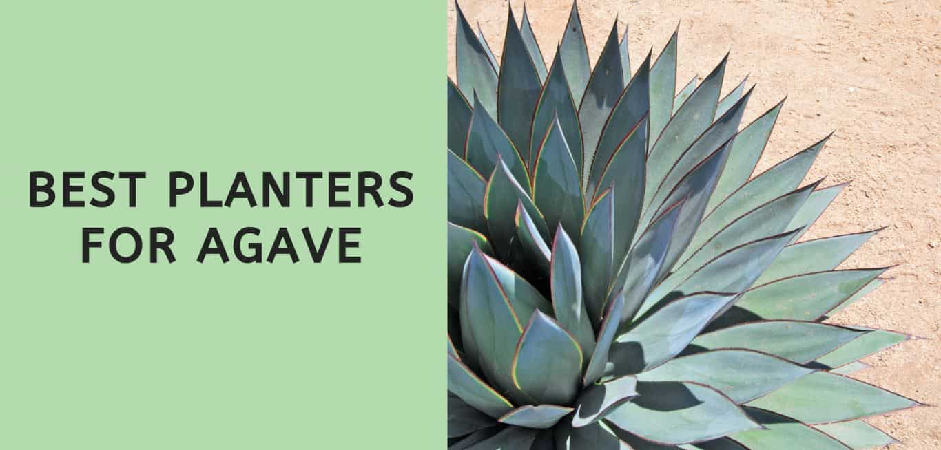 Best Planters for Agave