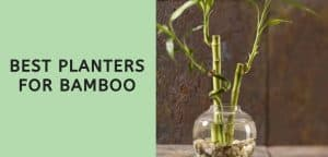 Best Planters for Bamboo