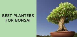 Best Planters for Bonsai