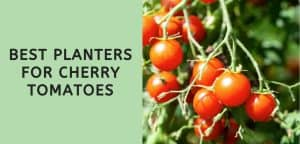 Best Planters for Cherry Tomatoes