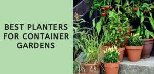 Best Planters for Container Gardens