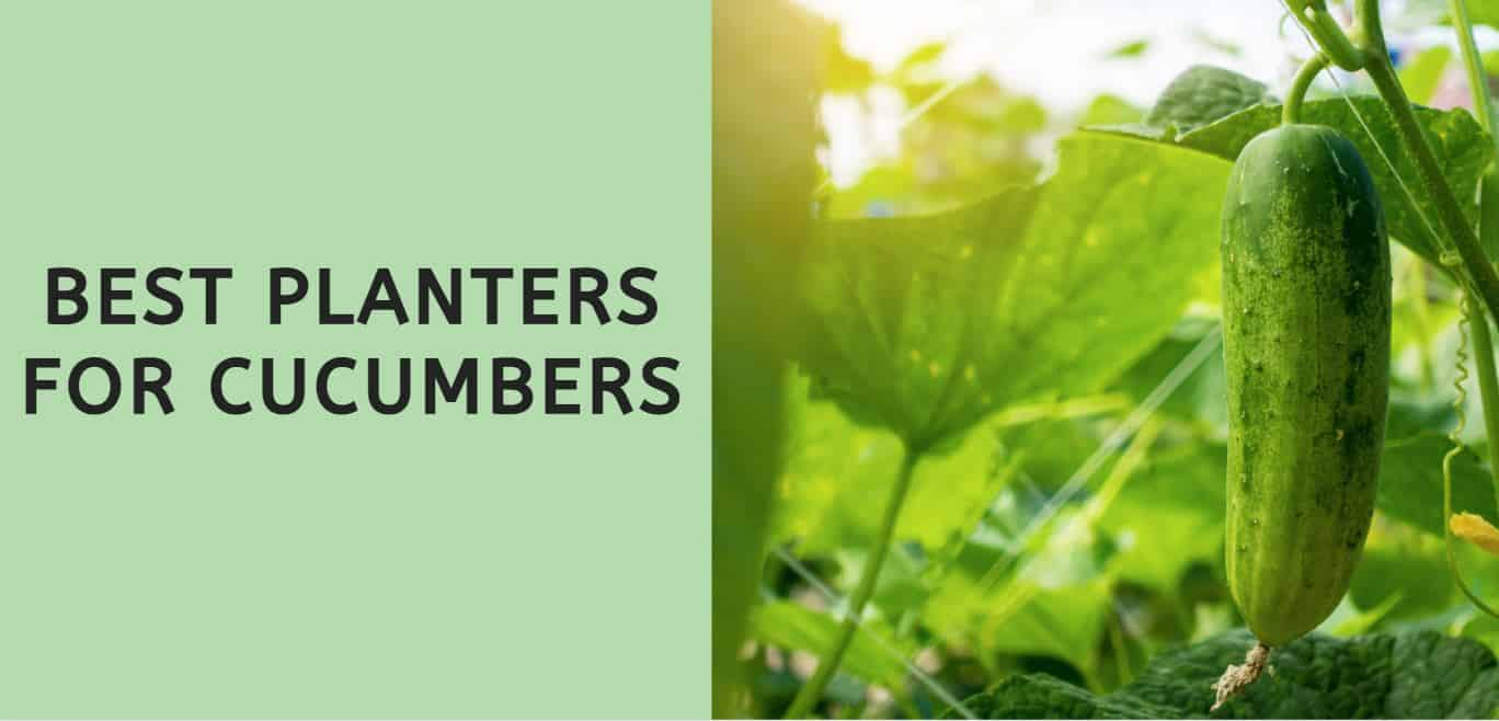 Best Planters for Cucumbers