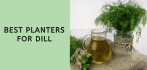 Best Planters for Dill