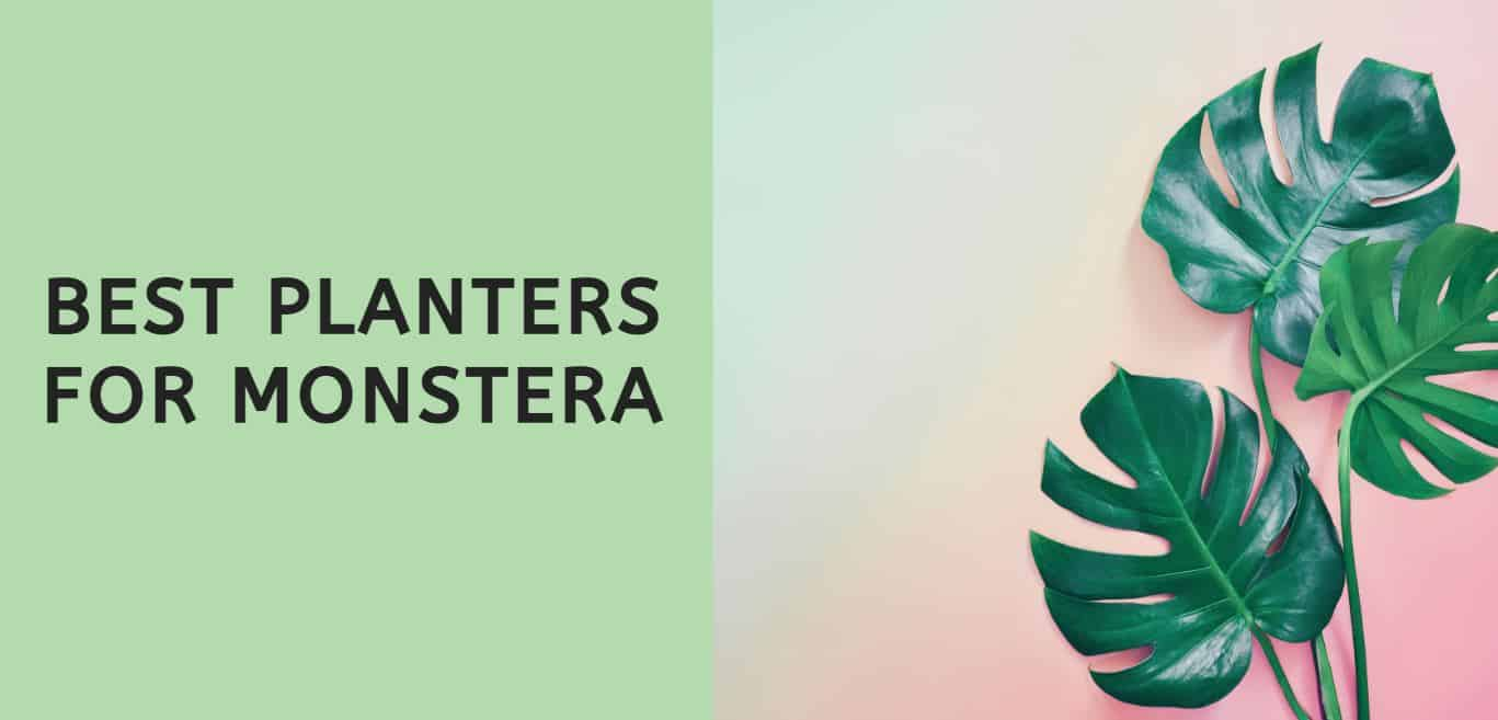 Best Planters for Monstera