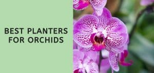 Best Planters for Orchids