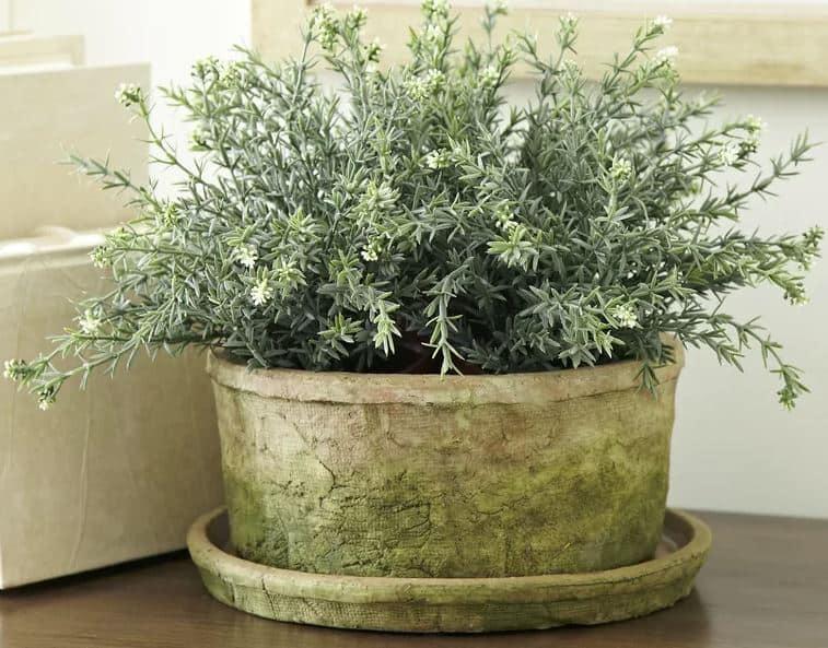 Cormac Earthenware Pot Planter