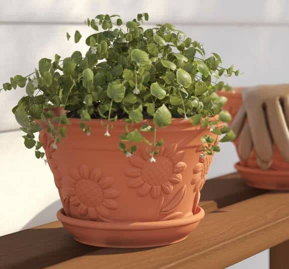 Matellas Raised Sunflower Terracotta Pot Planter
