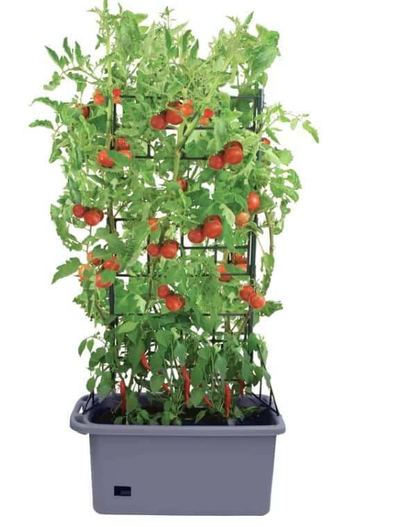 Mobile Mini-Garden Plastic Terrarium with Trellis