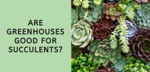 Are Greenhouses Good for Succulents?