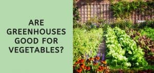 Are Greenhouses Good for Vegetables?