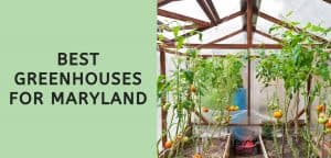 Best Greenhouses for Maryland