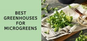 Best Greenhouses for Microgreens