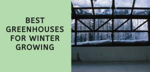 Best Greenhouses for Winter Growing