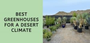 Best Greenhouses for a Desert Climate