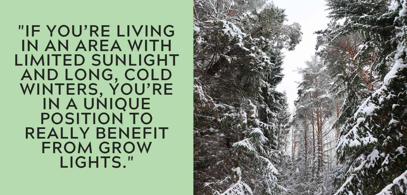 """""""if you're living in an area with limited sunlight and long, cold winters, you're in a unique position to really benefit from grow lights."""""""