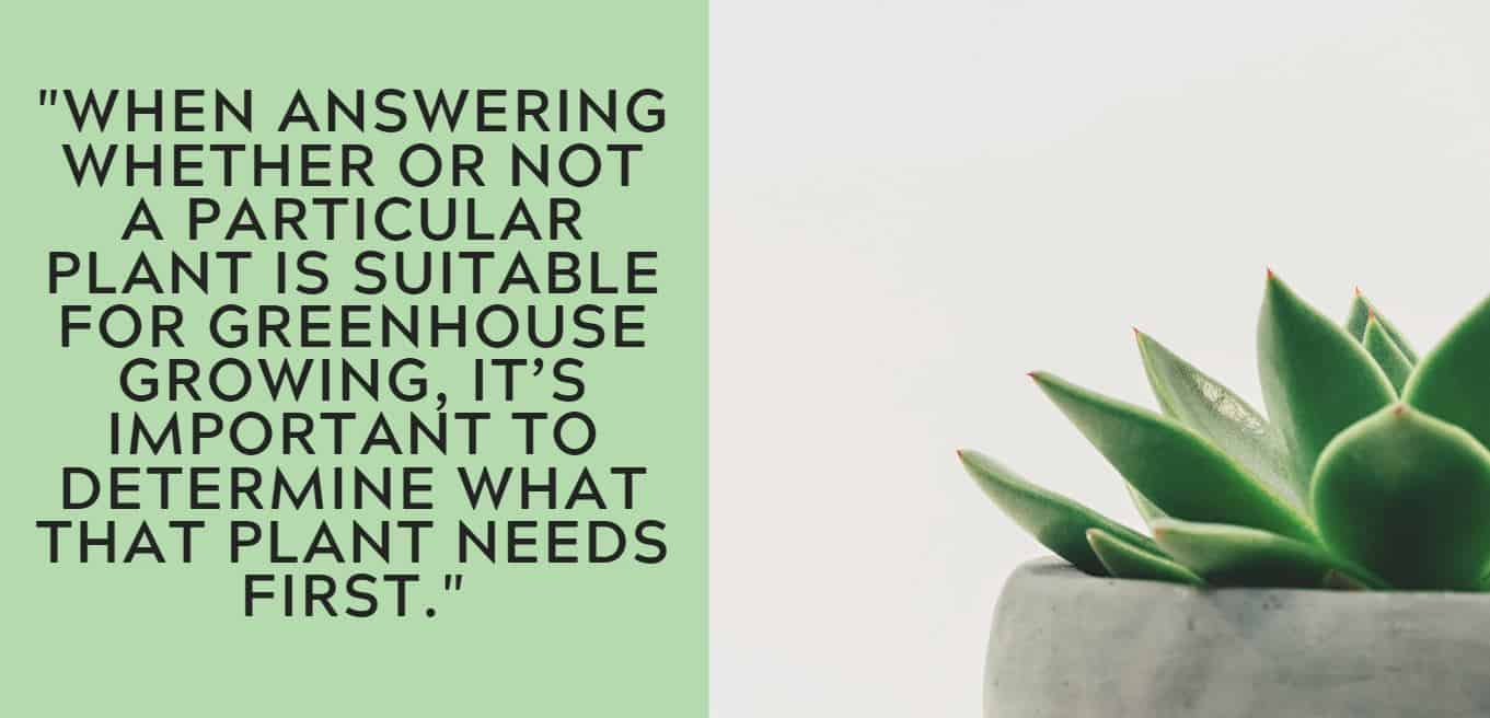 """""""When answering whether or not a particular plant is suitable for greenhouse growing, it's important to determine what that plant needs first."""""""